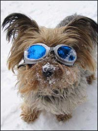 Hundebrille dog-goes